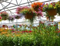 Greenhouse Beauty
