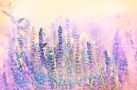 Beautiful purple flower in meadow