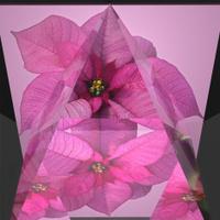 Poinsettia Pyramid Abstract Reflections