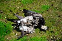 dead bird on the ground