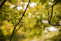 Late Summer Leaves