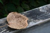 Dead leaf on old wood