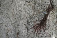 Tree texture, pattern, wood pattern, background