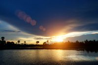 Sunset and sugar palm tree.