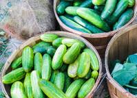 Cucumber Baskets
