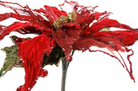Christmas Poinsettia Flower