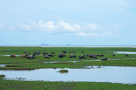Wildlife sanctuaries of southern Thailand.