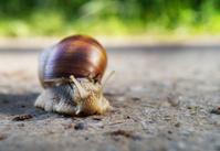 slug on a street