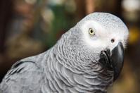 Face of gray bird