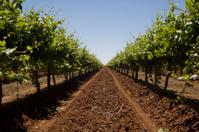 The Vineyard Series