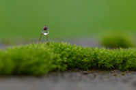 Mosses and Rain drop