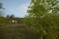 Bamboo Farm