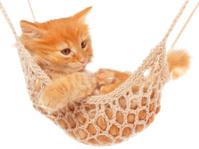 Cute red haired kitten lay in hammock