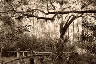 sepia jungle