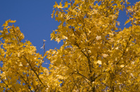 Tree on the sky