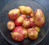 Bowl of Home Grown Potatoes