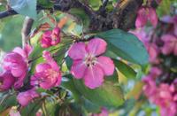 Beautiful pink flower blooming