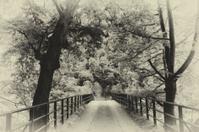 Bridge in bright forest. Natural composition. Sepia tone