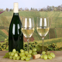 White wine in glasses in the vineyards