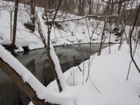 River and woods in Winter