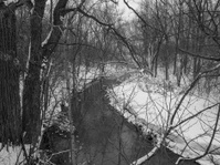 River and woods in Black and white