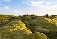 Iceland Moss Landscape
