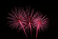 Pink tree firework