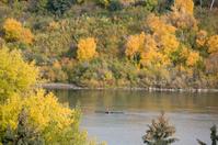 Rower on river in Saskatoon
