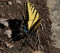 Colors, Butterlies, Wonder, Amazaement, Beauty, Nature,