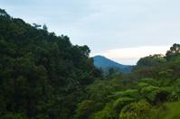 Rainforest in morning