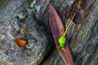 Forest stilll life