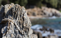 Reef closeup