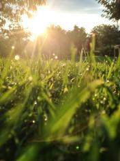 Wonderful Green Grass at Sunset