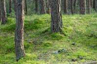 mushroom in green moosebed