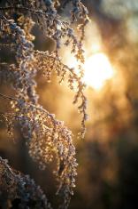 Frosty Morn I