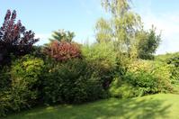Image of evergreen shrubs in garden border, shady, shade, sunny