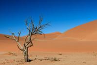 The last tree in the desert