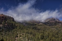 Clouds heading over the mountain forests of Tenerife