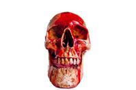 Skull  Haloween