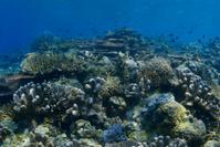 Hardcoral Reef