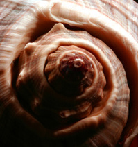 Close-Up Spiral Shell