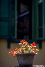 Flower pot under window