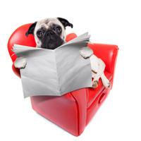dog sofa newspaper