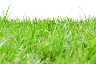 Rough grass on white background