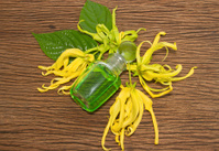 Essential oil with Dwarf Ylang-Ylang flower