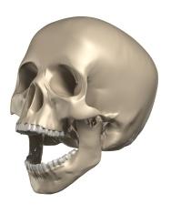 3D render of a human skull