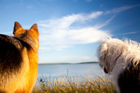 two dogs looking out to sea