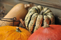 pattydan with other squashes