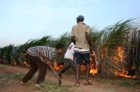 Zulu Sugar Cane Fire-fighters