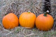 Pumpkins in Front of Hay Bales